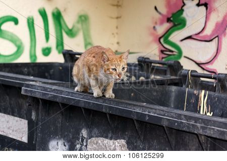 Homeless Redhead Kitten Cat On The Trash Container