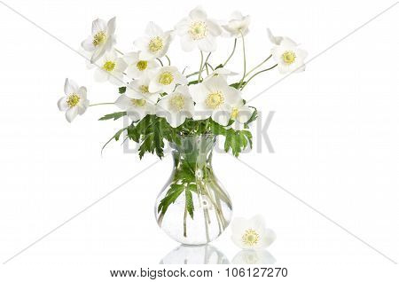Beautiful White Anemones Flowers Isolated On White