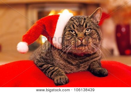 Gray Cat with Santa hat and a fireplace.