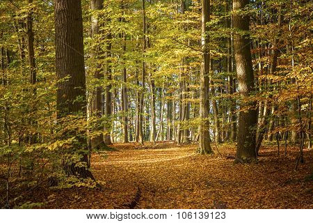 Deciduous Forest On A Sunny Autumn Day With Colorful Leaves On The Trees