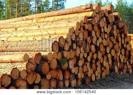 pile of cut down trees