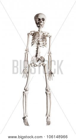 Toy skeleton for Halloween isolated on a white background