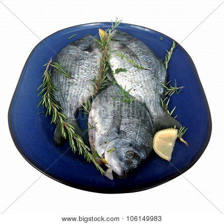 Tree Fresh Fish On A Blue Plate