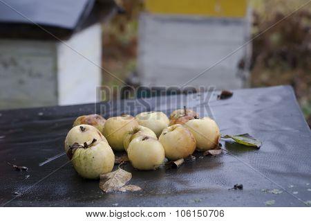 Apples On Beehive Top