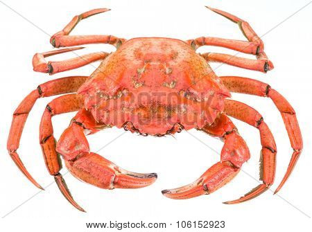 Cooked crab. File contains clipping paths.