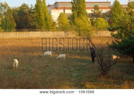 Shepherd And Tree