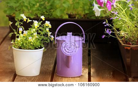 Watering flowers in balcony with watering can