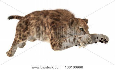 Big Cat Sabertooth