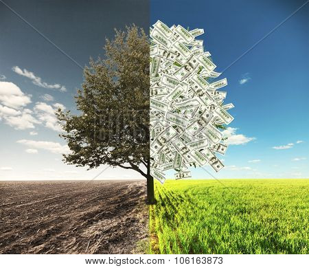 The field and money tree where one side with dollars and another empty