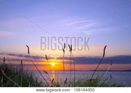 Wild Tall Grass Sunset On The Wild Atlantic Way