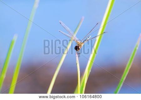 Beautiful Nature Photography With Dragonfly On The Grass And Blur Sky Baackground