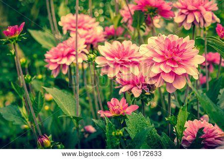 Violet Flowers In A Green Garden