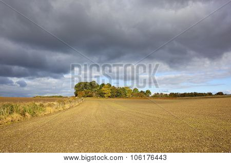 Small Copse In Autumn