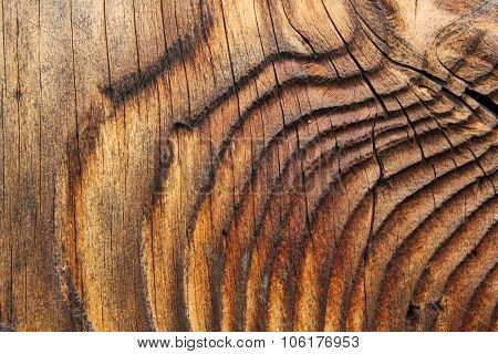 Beautiful Natural Pattern On Spruce Plank