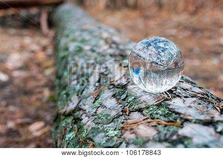 Glass ball or orb for fortunetelling, soothsaying, predicting the future on tree trunk and autumn ba