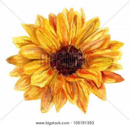 Watercolor Sunflower Drawing On White Background, Vintage Style Botanical Art