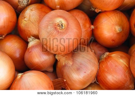 Fresh onions.