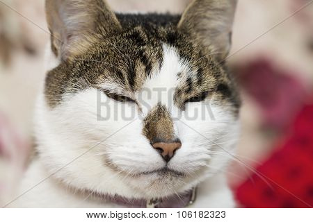 Cat's Gaze