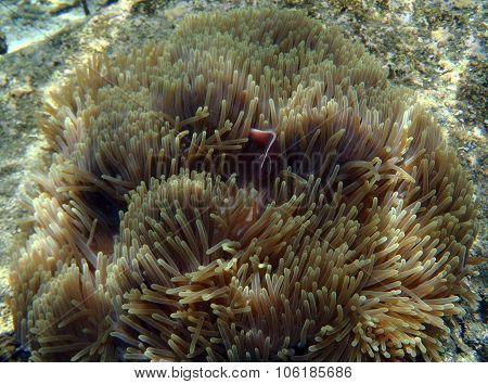Exotic Marine Life