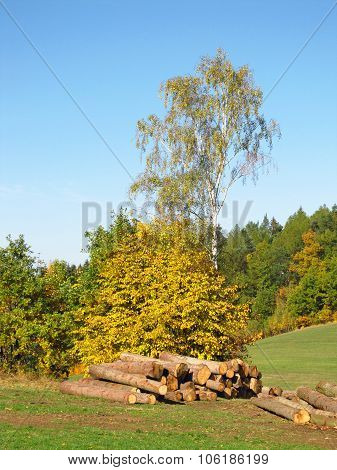 cut trees in autumn landscape