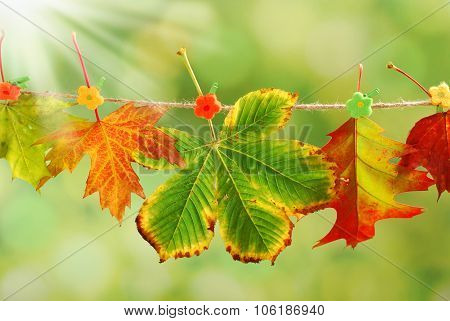 Autumn Leaves Hanging On A Rope In A Park