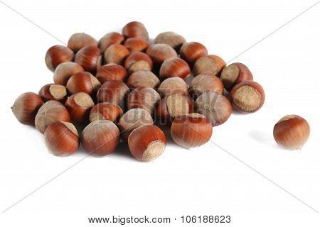 many hazelnuts