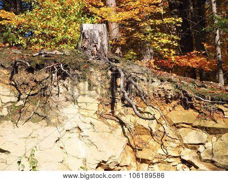 stump on the rock