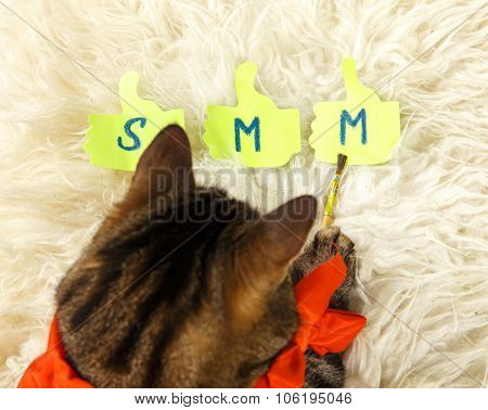 Cat Drawing Smm By Brush In His Paw