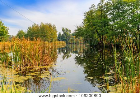 Nice autumn scene on small river in wild forest