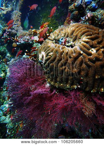 Giant Coral Underwater Bali