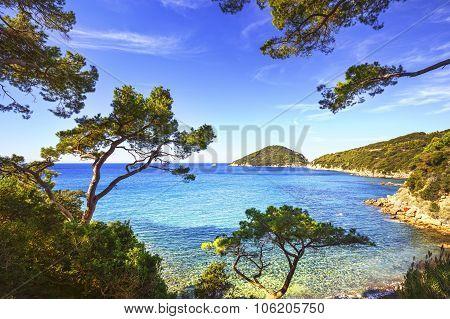 Elba Island Sea, Portoferraio Viticcio Beach Coast And Trees. Tuscany, Italy.