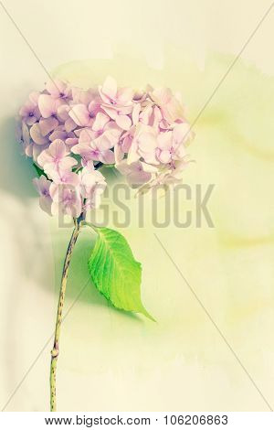 Subtle Artistic Floral Backgrodund With Hortensia Flowers