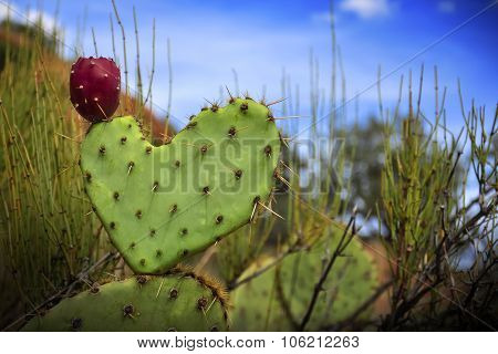 Heart Shaped Cactus with a Lone Berry