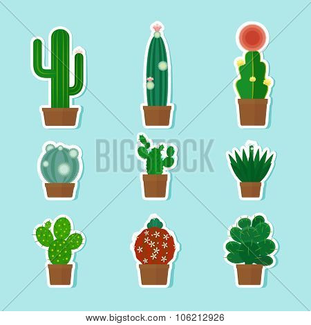 Cactus Vector Icons