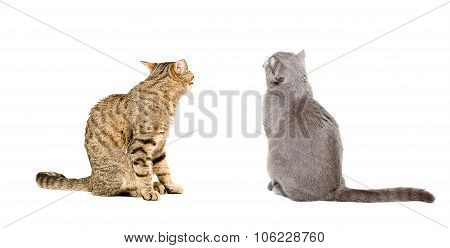 Two cats sitting together, back view