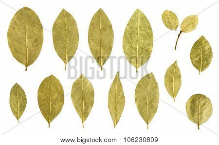 bay leaf collection isolated on white