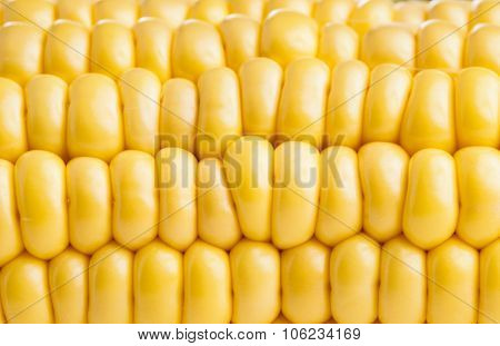 Corncob Ready For Eating And Cooking