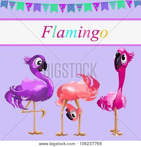 Three funny Flamingo on a pink background