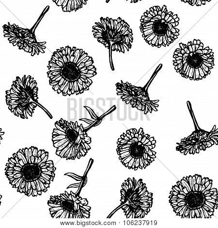 calendula flowers, sketch seamless pattern, black contour on white background. Vector