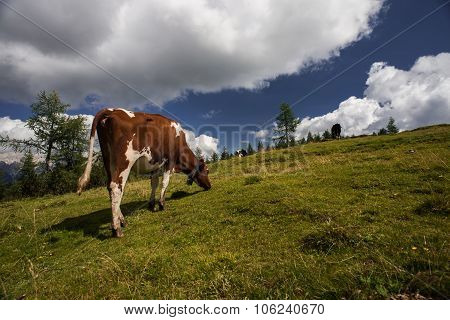 Cow Grazing And Mountain Landscape