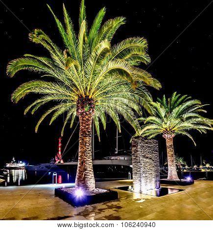 Palm Trees In The Night Lights In Marina Porto Montenegro, Tivat, Montenegro