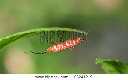 Orange And White Insect Resting On Leaf Asia