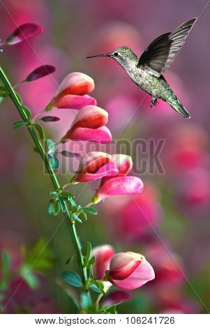 Hummingbird With Pink Flower Over Green Background