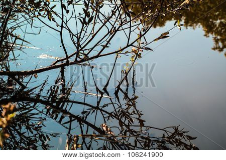 dry tree branches are reflected in the clear water pond