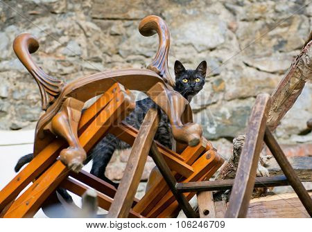 Cat Inside A Mountaine Of Wooden Chairs And Vintage Chairs