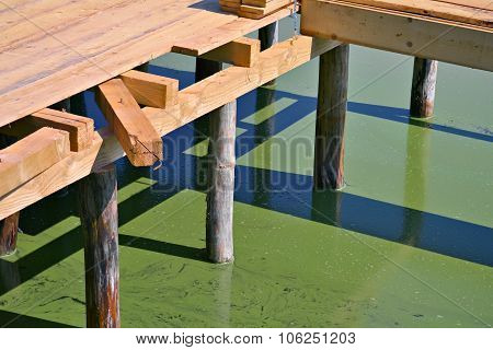 Water With Algae