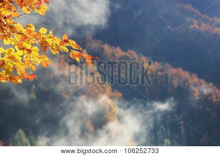 Tree Branch With Autumn Colored Leafs