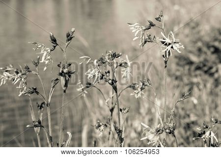 Wild Meadow Flowers On Stalks In Beige Tones