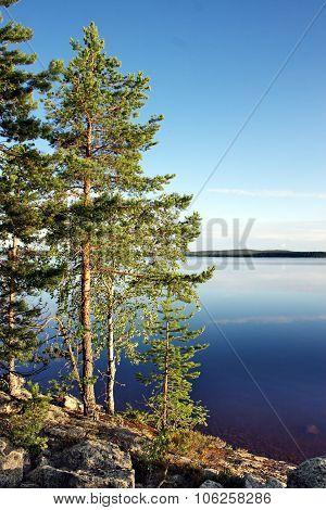 Pines at lake. Karelia. Russia