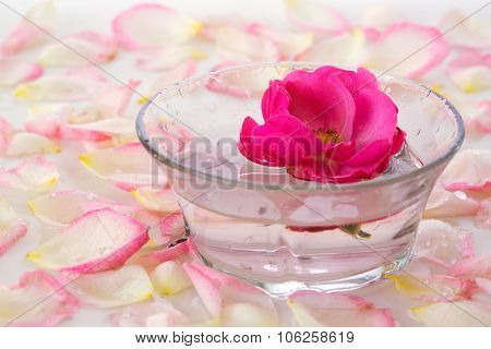 Pink Rose in a bowl of water and white petals.